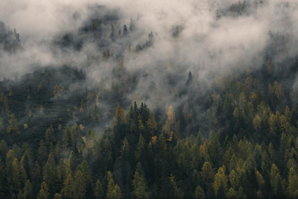 nature landscape woods forest aerial travel adventure fog green leaves
