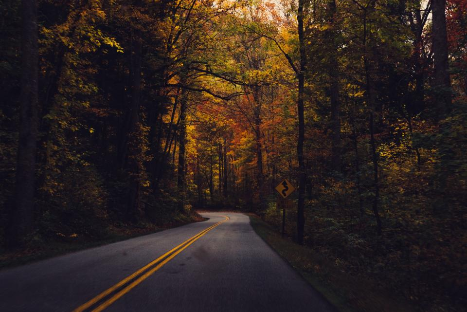 rural winding road trees forest woods fall autumn nature