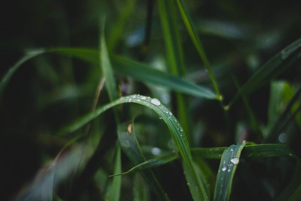 green plants nature rain drops