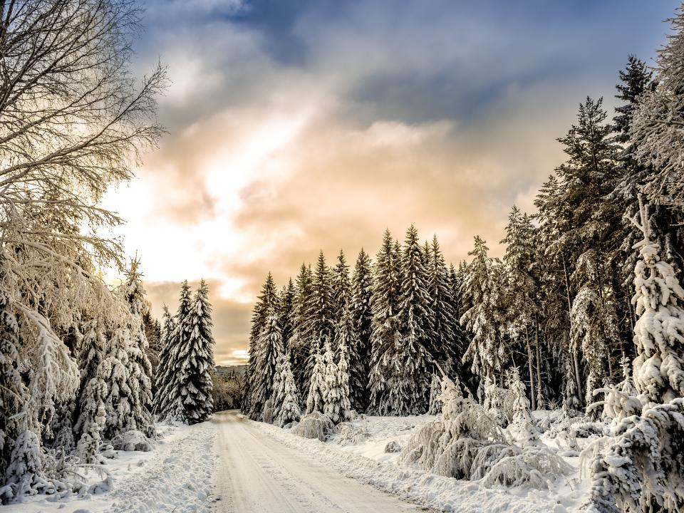 snow winter white cold weather ice trees plants nature pathway road clouds sky