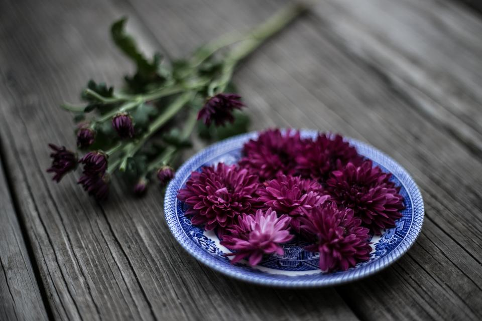 purple violet color petal flower green leaf plate wooden table blur