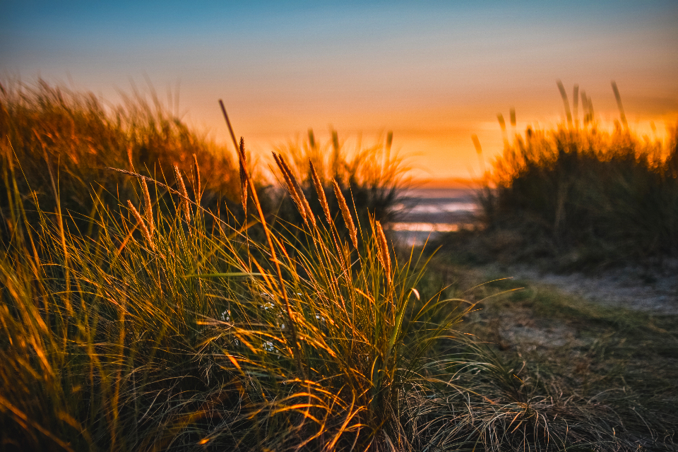 wildflower beach sunset grass sun red blue sky path track sea glow landscape