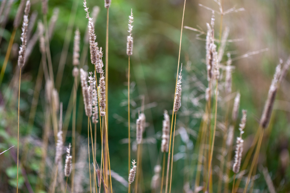 tall grass nature bokeh field meadow fall farm environment outdoors natural background landscape plant