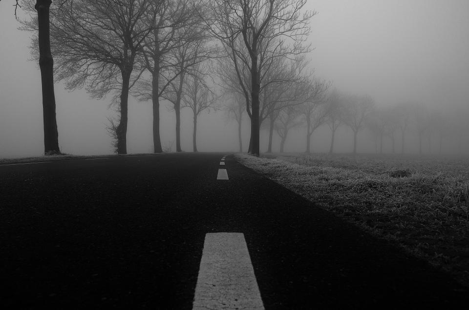 road fog winter frost grass trees grey pavement black and white