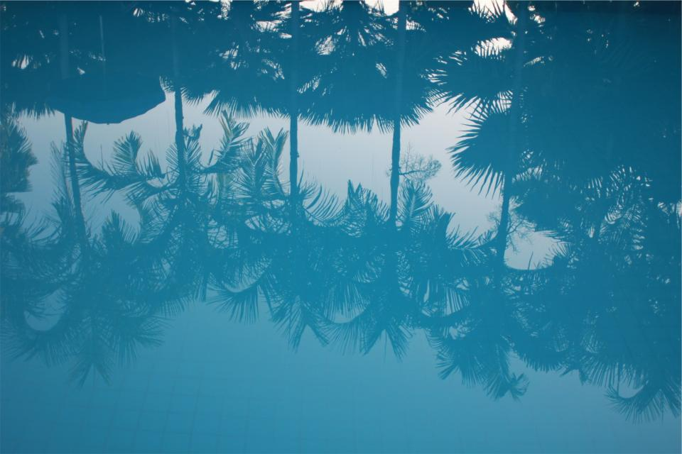 blue water reflection palm trees