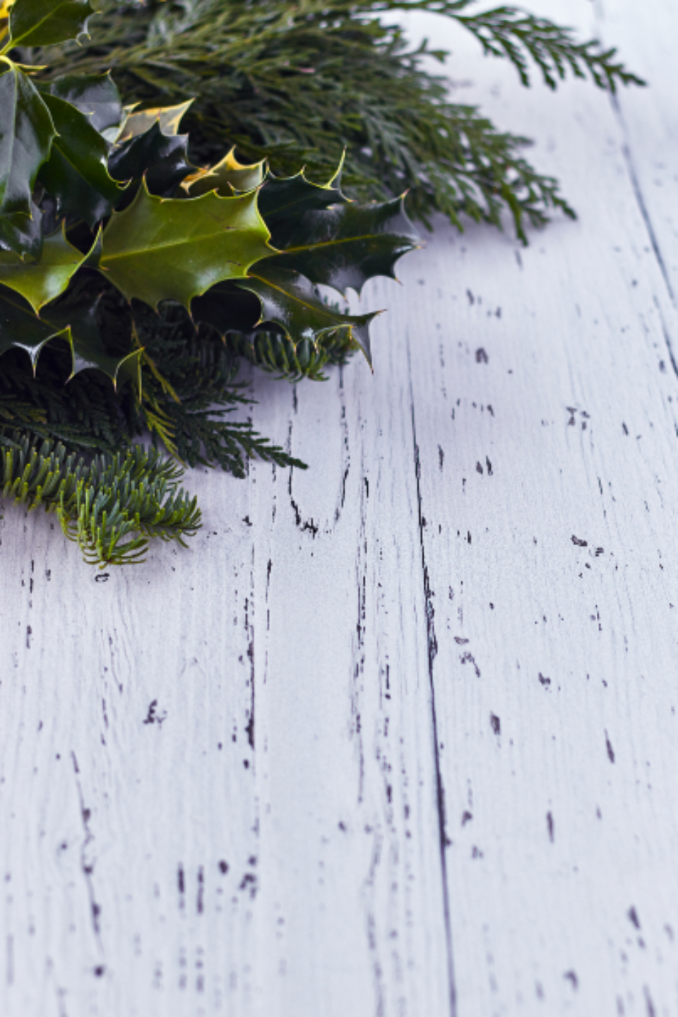 holly seasonal background christmas winter rustic wood green branch decorative xmas holiday copyspace decoration texture