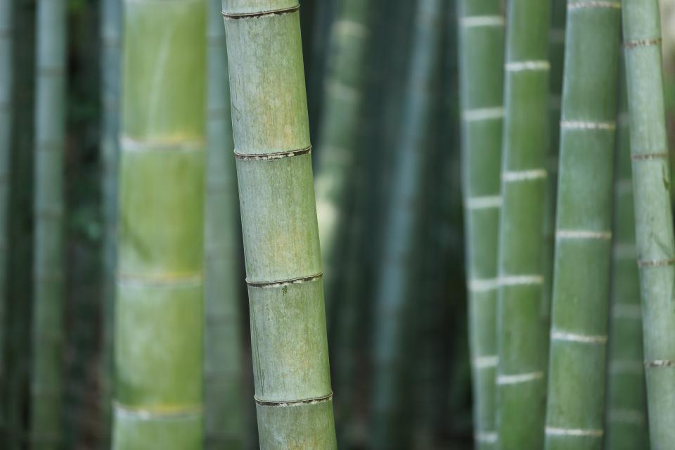 nature landscape bamboo stick green
