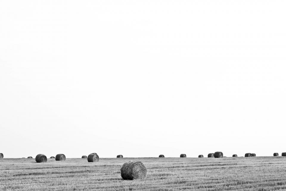 black and white farm country hay fields sky