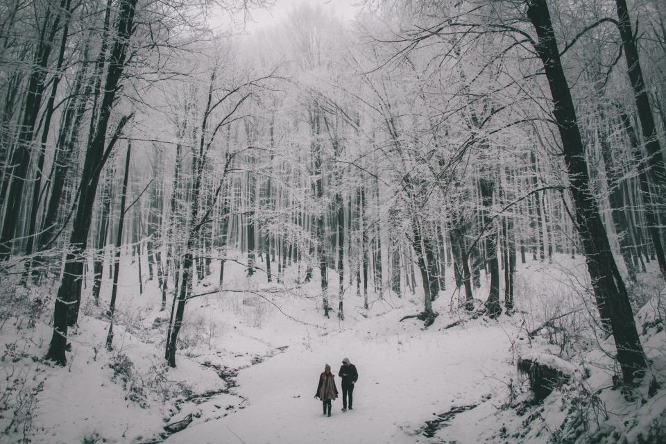 people couple travel outdoor nature snow winter trees plant forest cold weather black and white