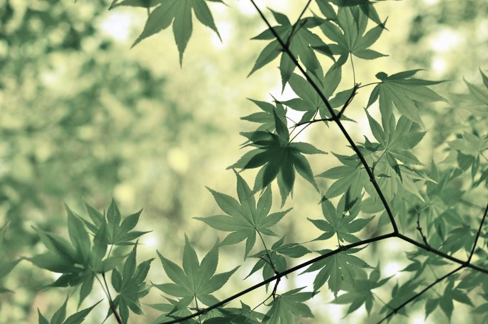 green leaves plants branches trees forest woods outdoors nature summer