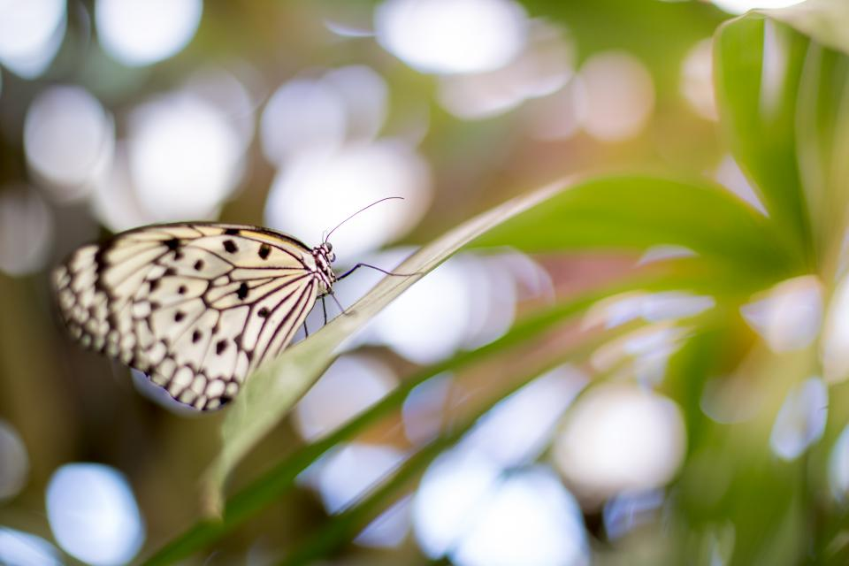 butterfly flower nature plant insect gray blur bokeh