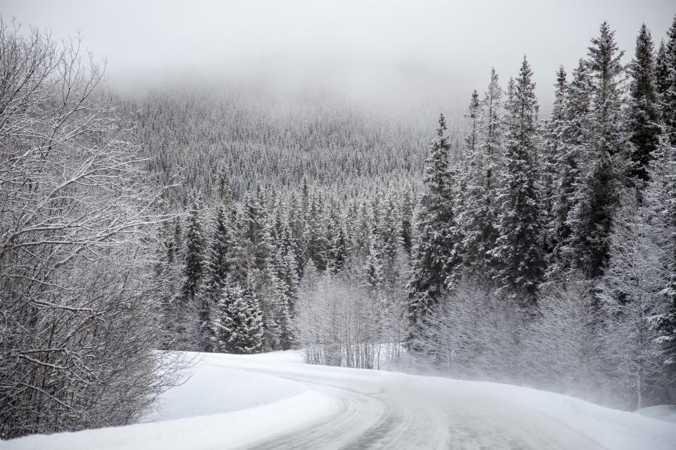 snow white winter trees plant nature forest landscape road