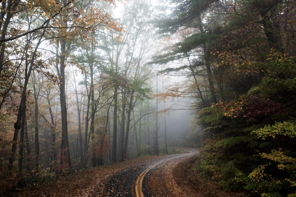 rural road countryside forest woods trees fall autumn leaves fog foggy