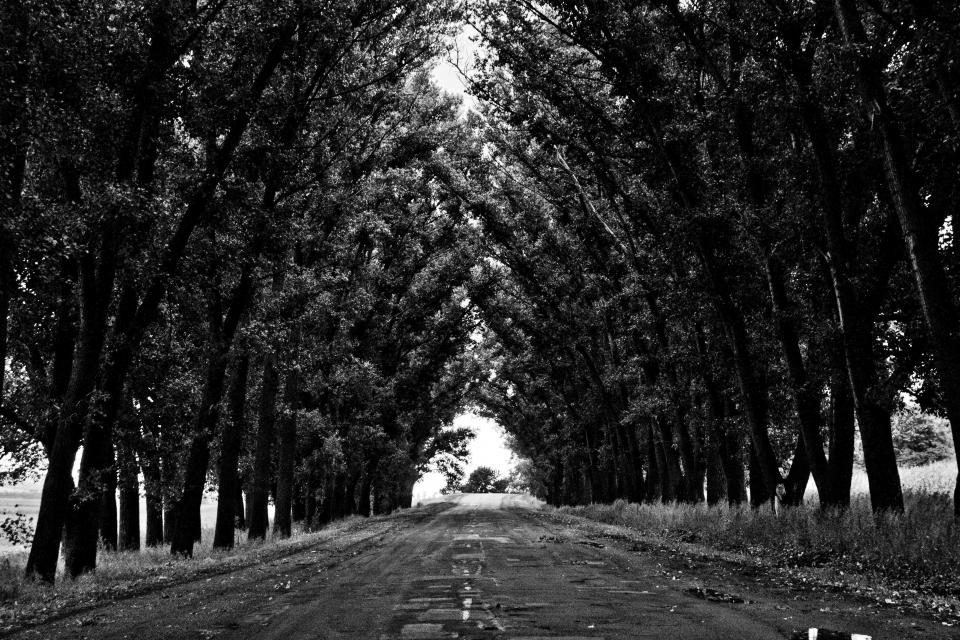 black and white street road path trees