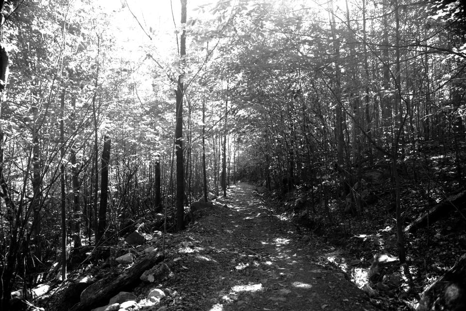 forest woods trail trek hike path nature trees dirt ground black and white