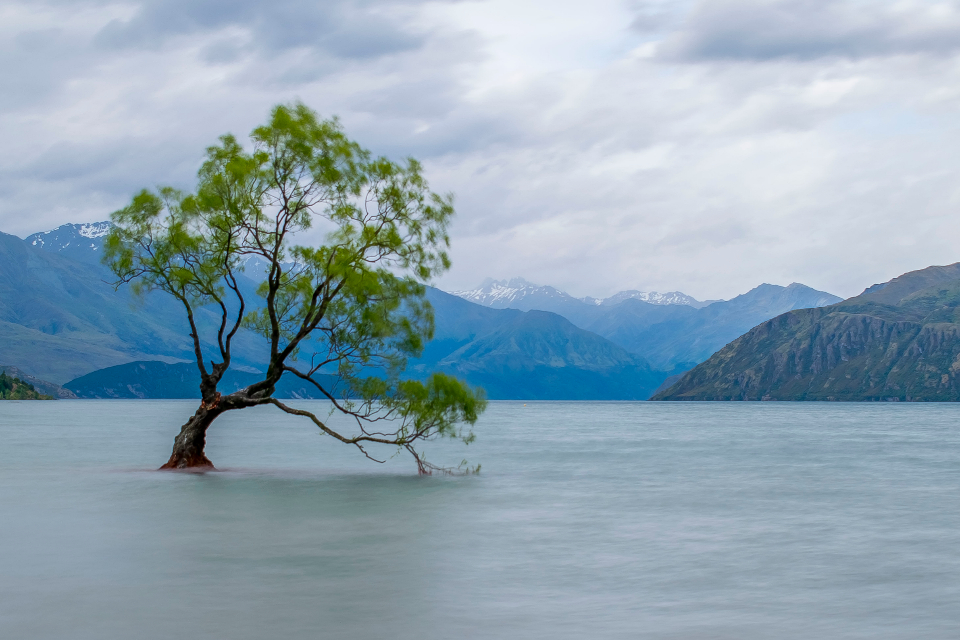tree wanaka lake water nature landscape new zealand mountains outdoors sky clouds scenery