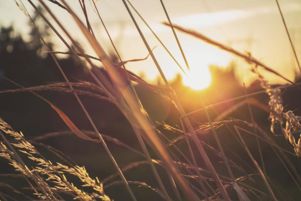 grass bokeh sunlight sunshine sunrise sky