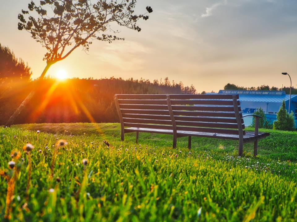 green grass lawn outdoor nature view bench sunlight sunrise sunshine trees plant house sky cloud flower