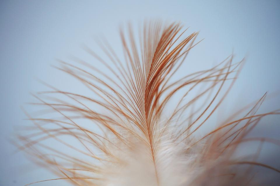 feather leaves bird strand brown white smooth