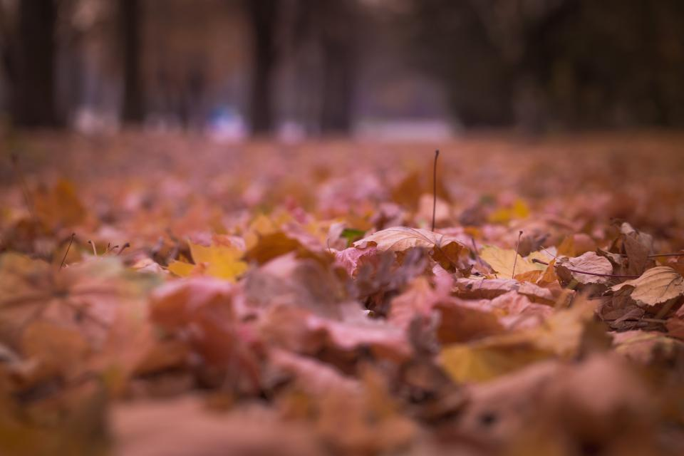 leaf autumn fall nature blur outdoor