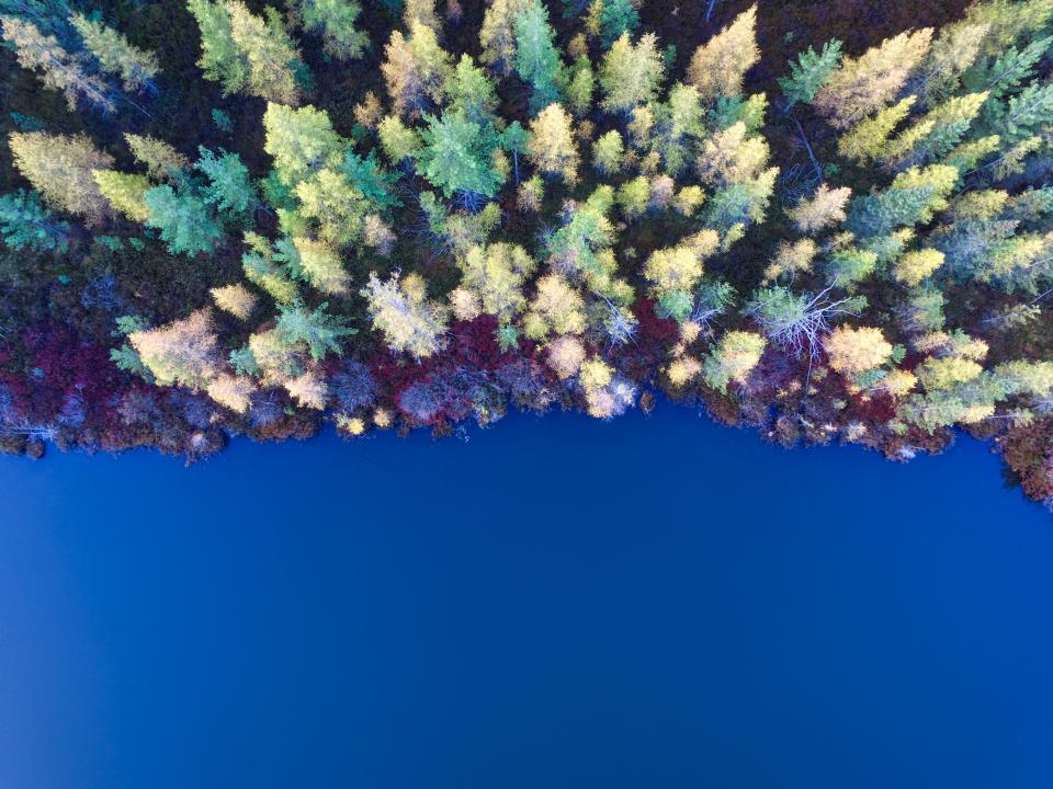 trees clolorful aerial view plant forest nature fall autumn sea ocean blue water