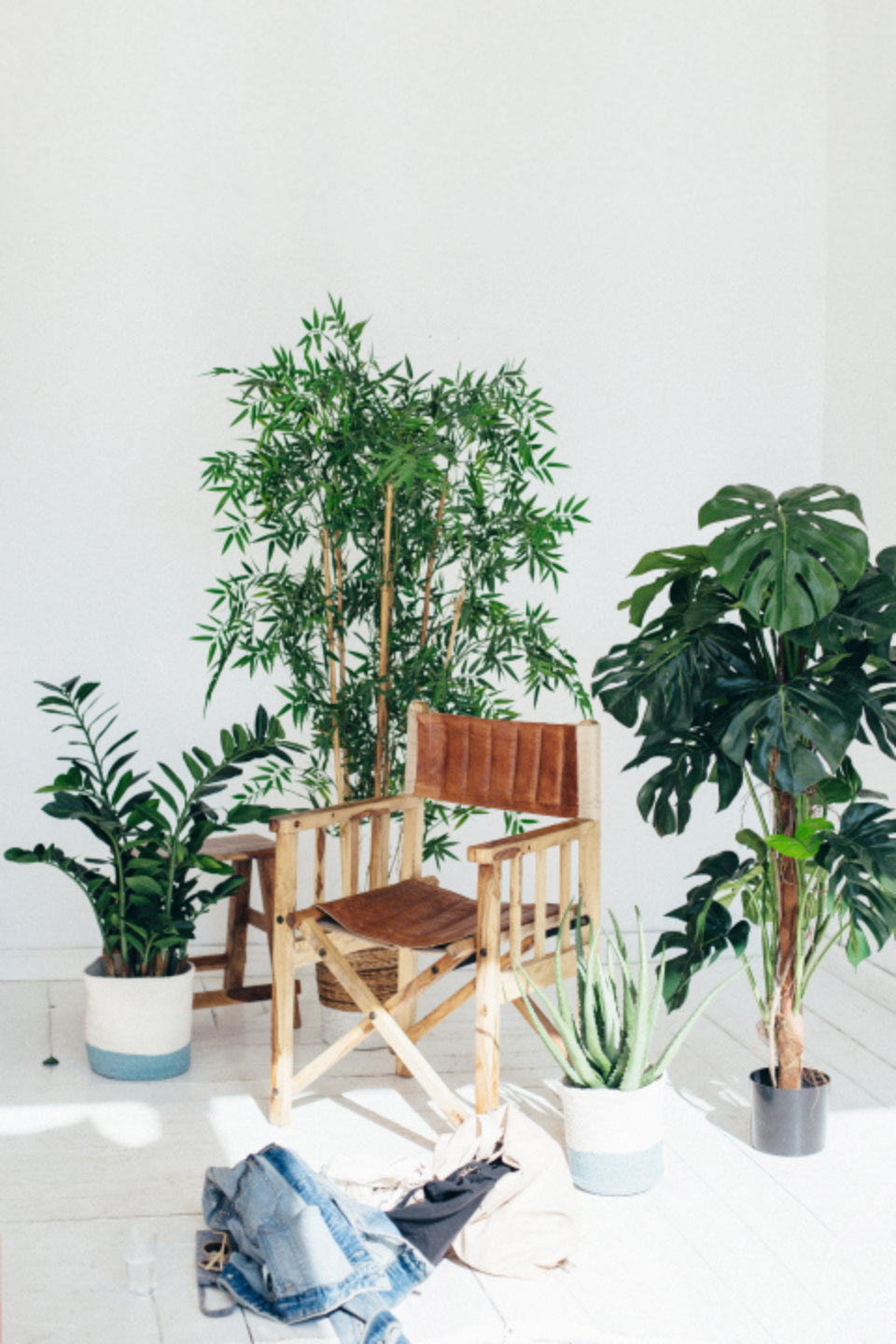 director chair plants inside internal house plant clothes minimal white pot gorw nature