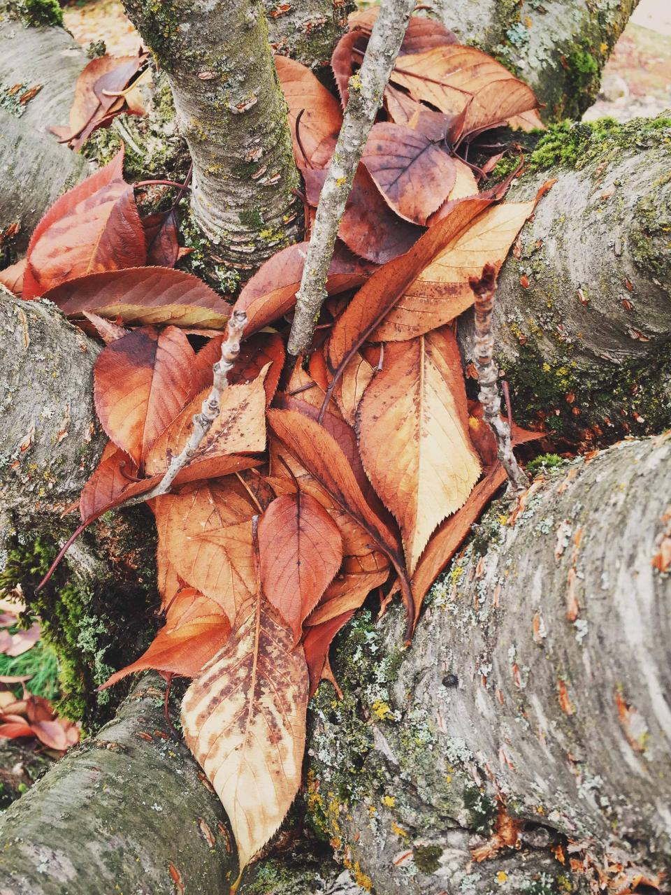 tree trunks leaves forest woods nature bark