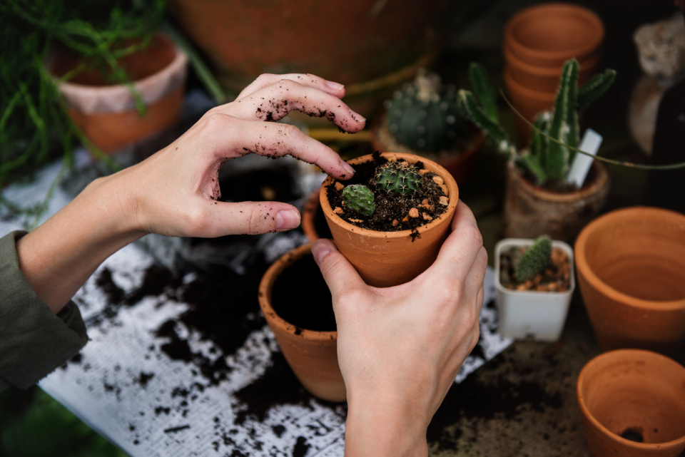 ecology environment garden gardening glasshouse green group hobby nature plant plants pots real relax trees various working woman people closeup hands transfer change caucasian nordic european