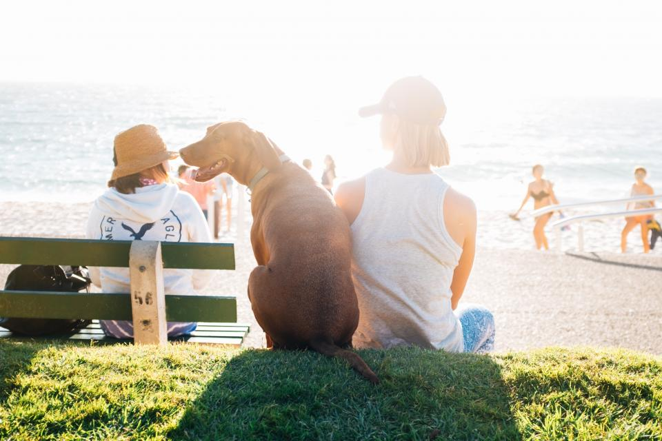 people man woman dog sun summer water ocean sea beach green grass waves travel adventure vacation