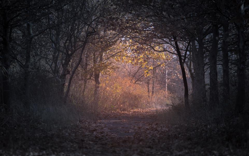dark trees plant nature path leaf fall autumn path forest