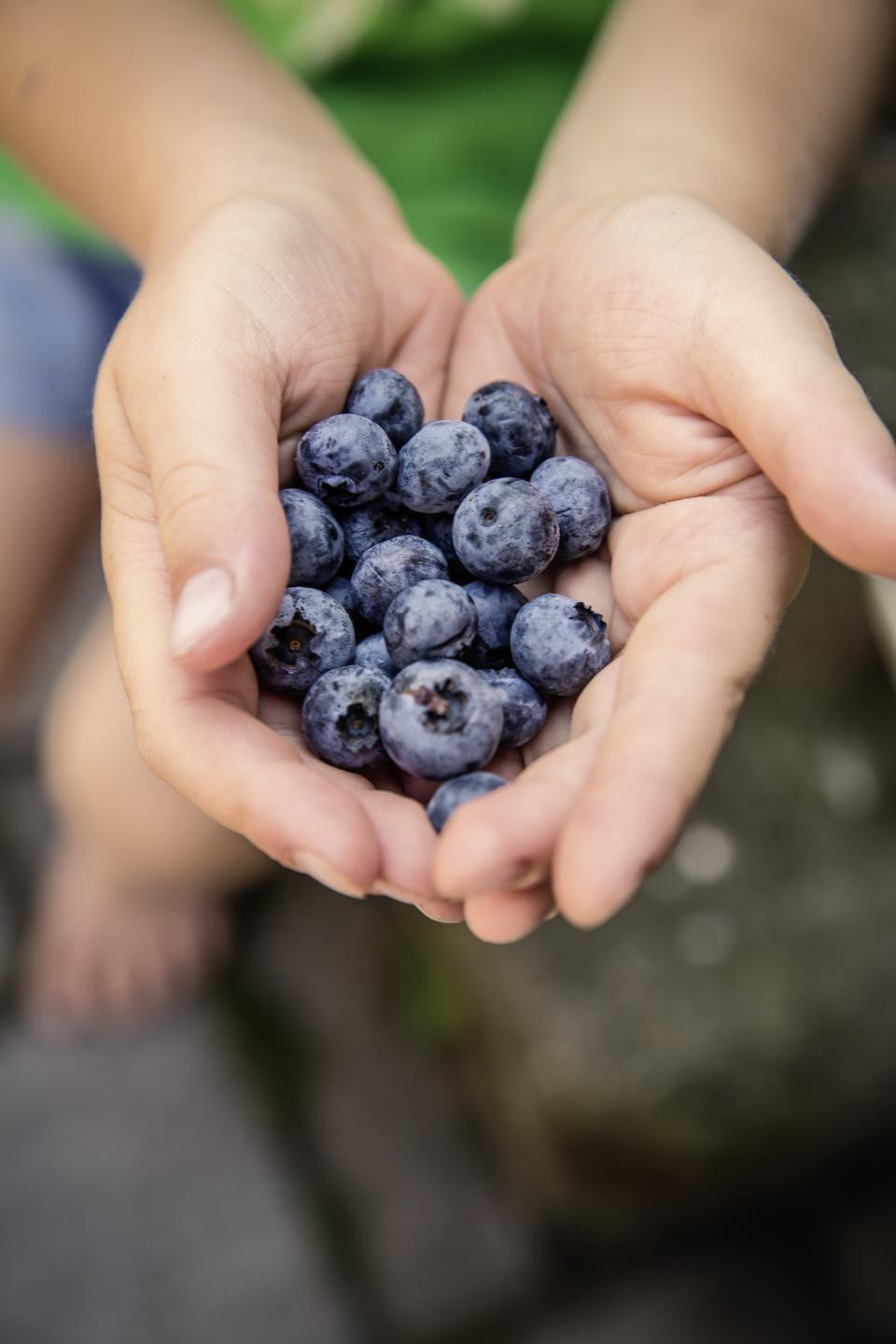 berry blueberry fruit food palm hand blur