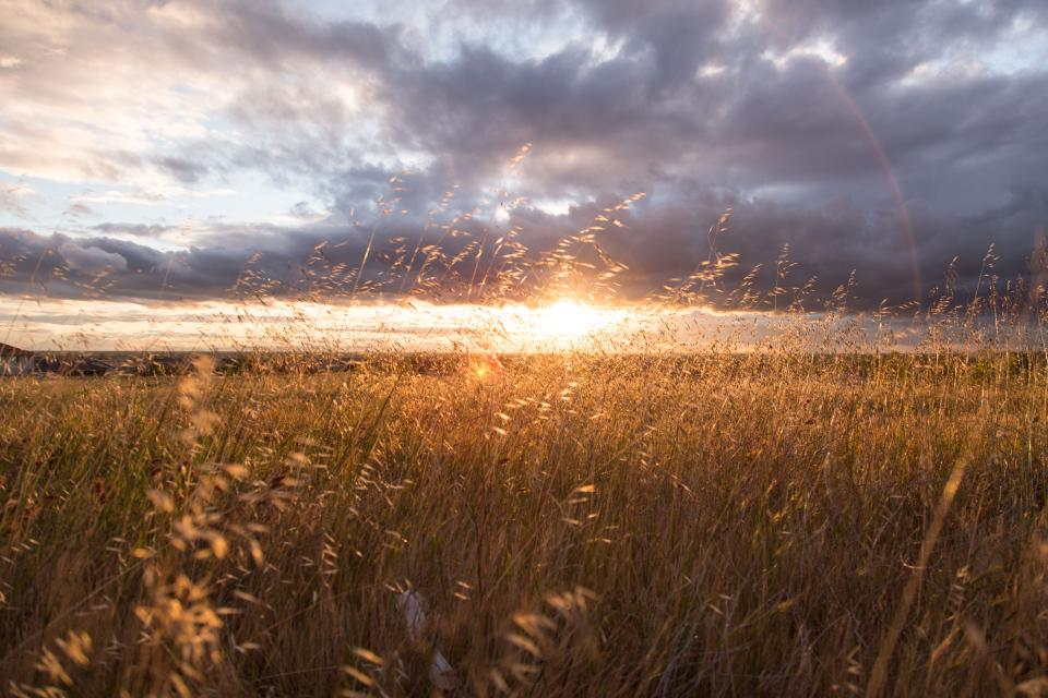 sunset sun rays fields crops plants clouds sky rural countryside rural