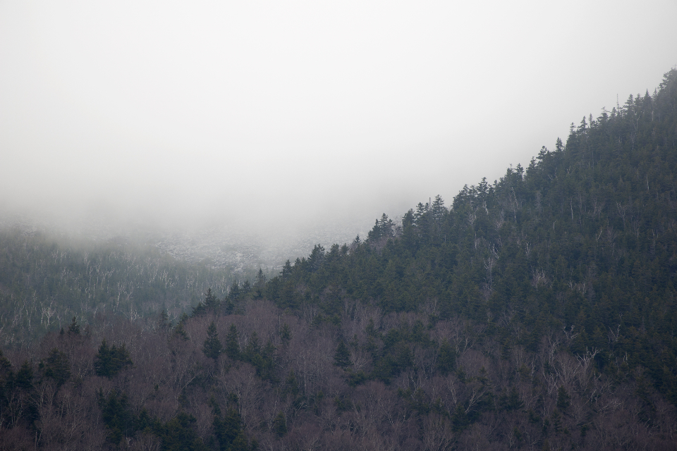 fog mountain trees climate weather nature outdoors forest mist landscape mountainside slope valley