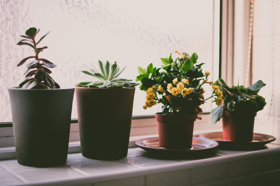 plants window sill garden house home flowers nature