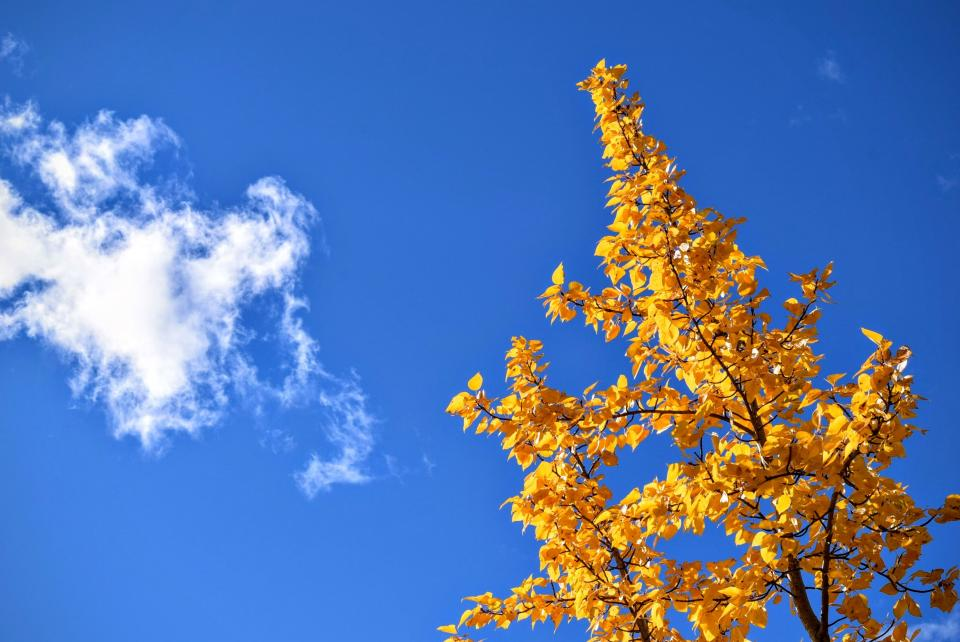 blue sky clouds yellow leaves trees nature fall autumn sunshine