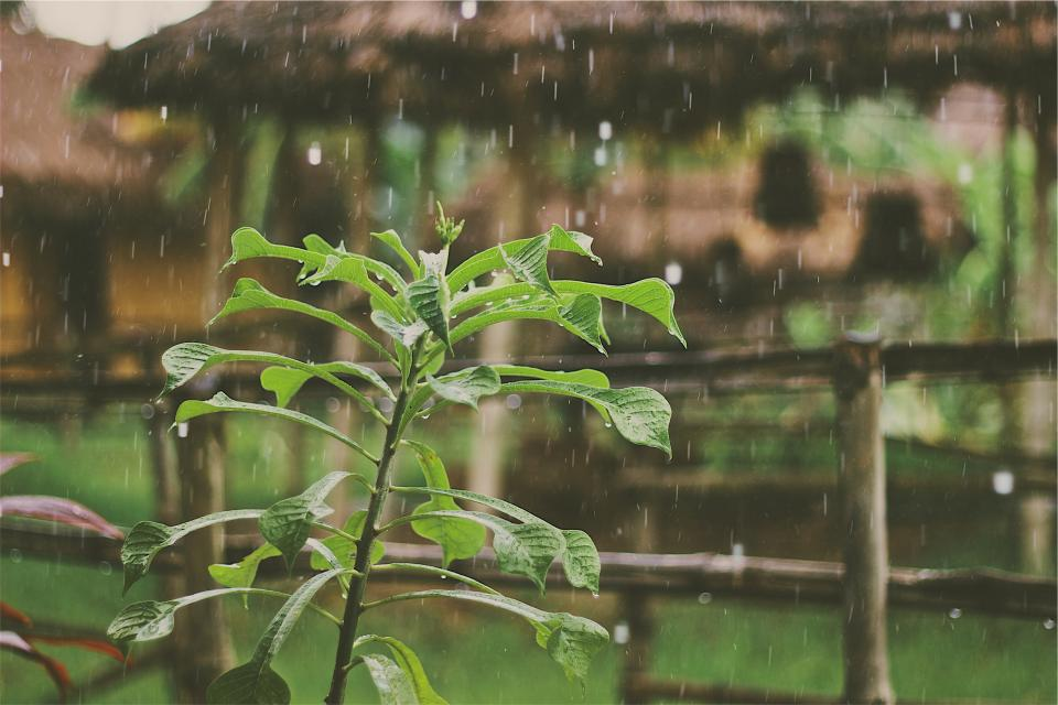 raining rain drops plants leaves wet