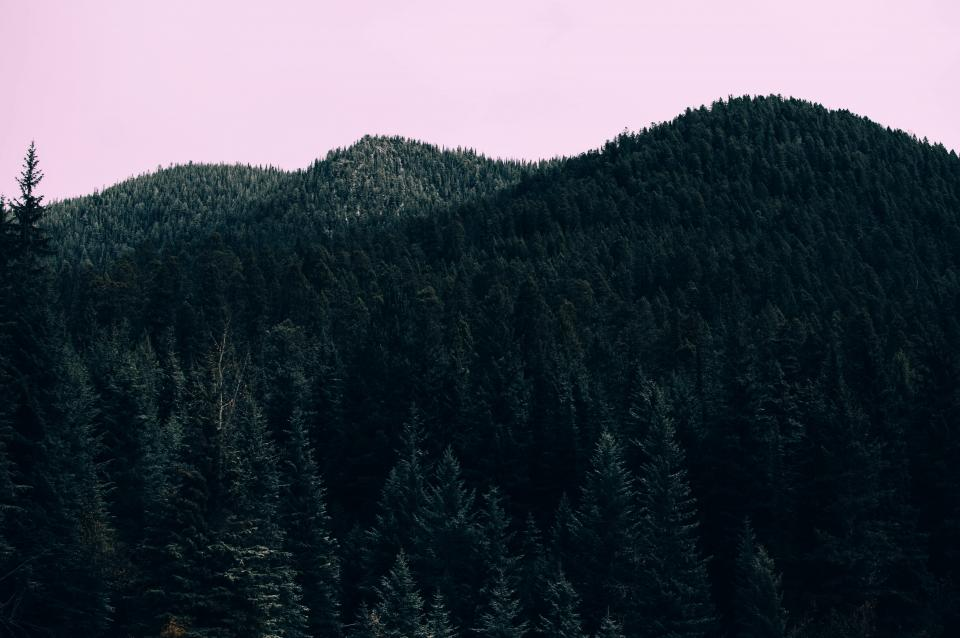 leaves green trees plants forest nature mountain sky