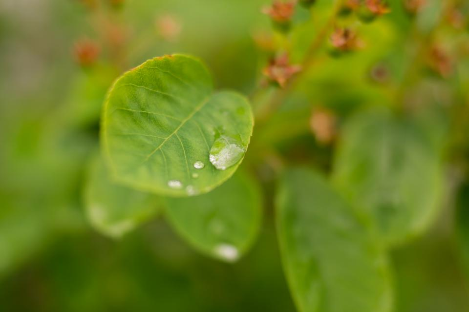 water drop leaf leaves green