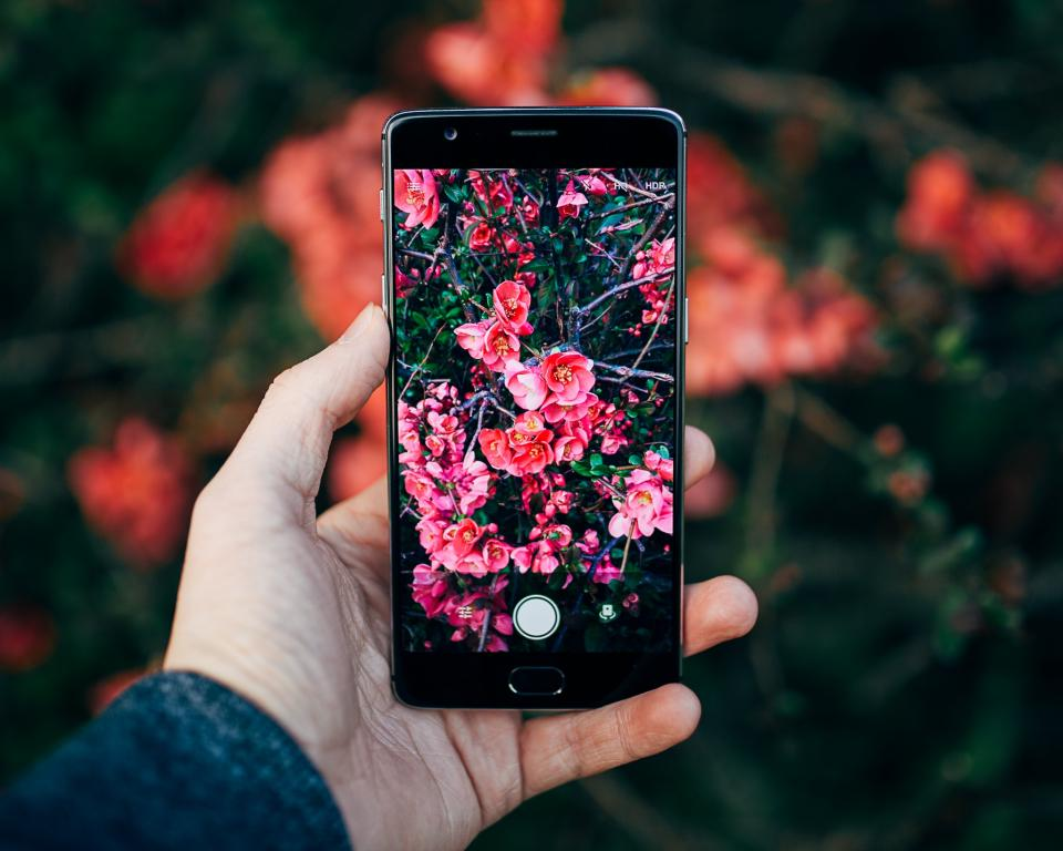 mobile phone camera photography electronic gadget modern technology touchscreen nature flowers garden hand palm blur