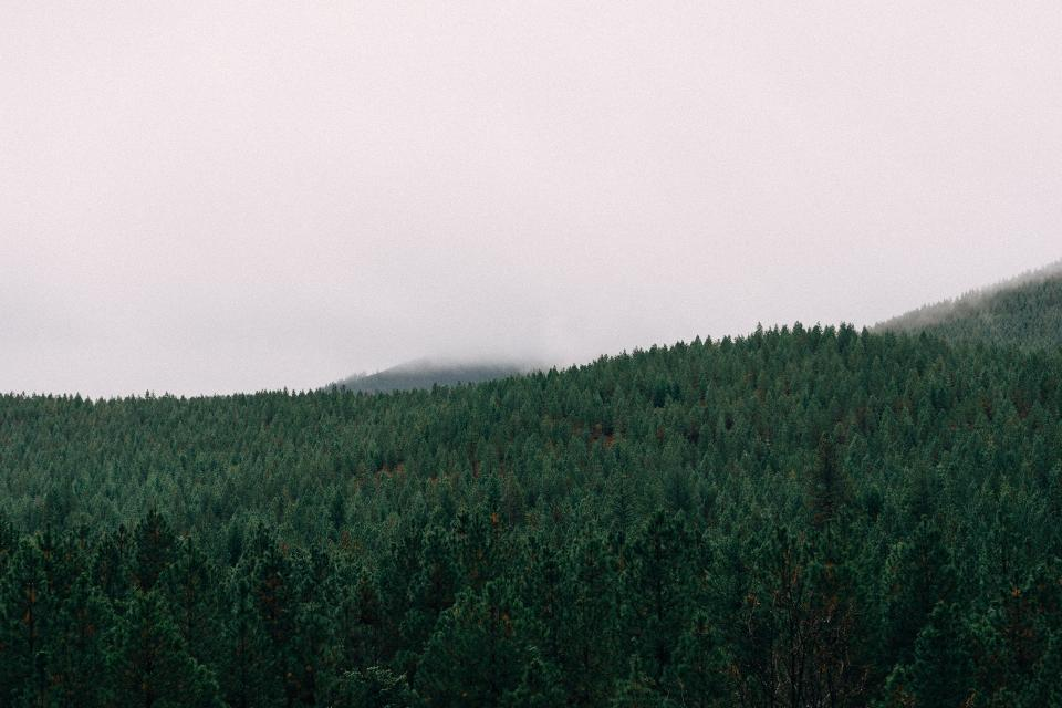 forest trees woods landscape nature sky grey fog