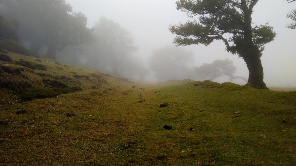nature landscape trees fog grassland grass green chill relax