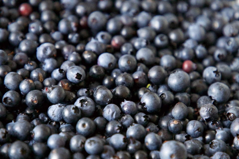 blueberries background food berry fresh blue fruit organic healthy eating close up