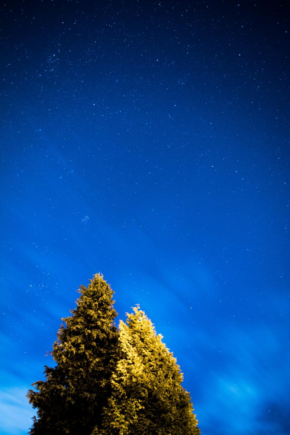 tree plant nature blue sky dark night