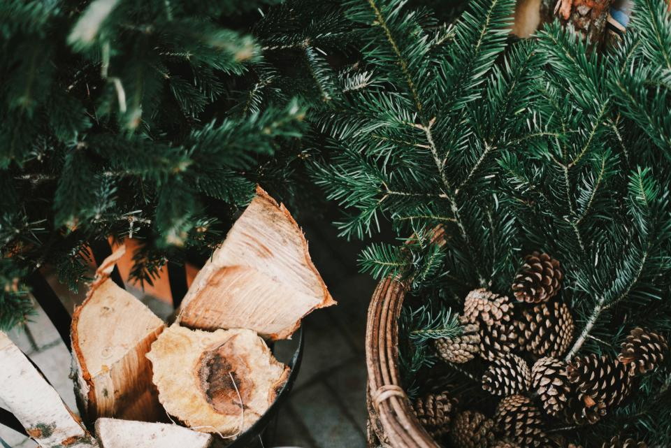 pine cone crops leaves bark wood green basket
