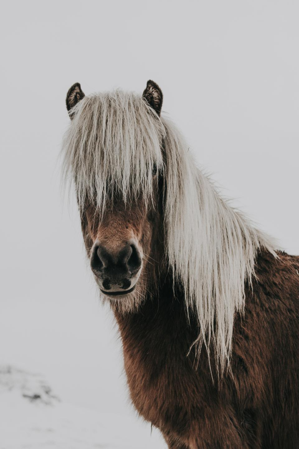 horse animal brown white snow winter cold weather hair