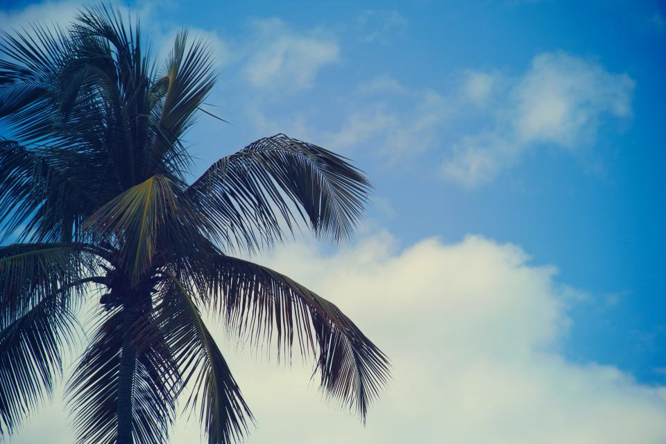 palm trees blue sky summer sunshine clouds nature tropical