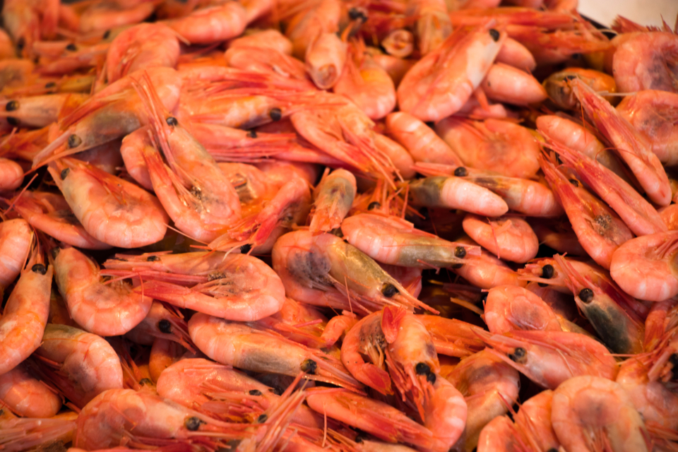 Shrimps amazing norway fresh organic food fish