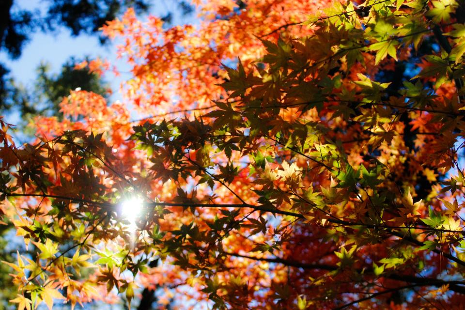 nature trees leaves autumn fall summer sun
