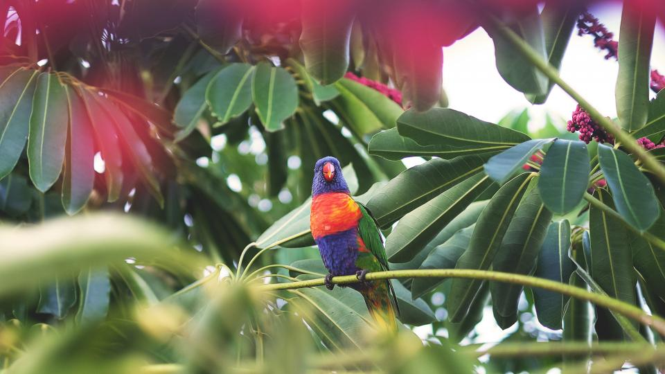 bird fly animal beak feather leaves plant green garden fllower fruit colorful parrot