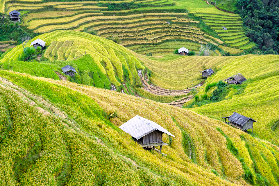 Ruong bac thang vietnam rice paddies agriculture green grass hills fields mountains rural countryside huts nature outdoors lush trees